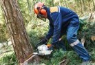 Berry Springs Tree cutting services 21